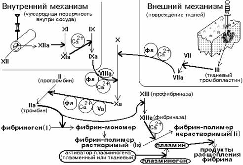 Внешний механизм свертывания